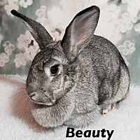 Adopt A Pet :: Beauty - Auburn, CA