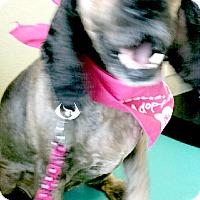 Adopt A Pet :: Trisha Marie - Sugarland, TX