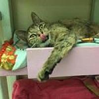 Adopt A Pet :: Ellie - Westbury, NY