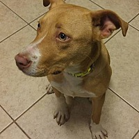 Adopt A Pet :: Jessica - Savannah, GA