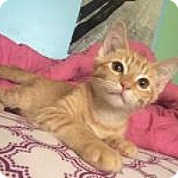 Adopt A Pet :: Tator Tot's - Mission Viejo, CA