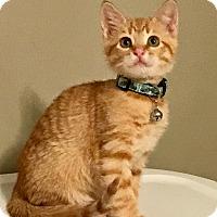 Adopt A Pet :: Finnick - Houston, TX