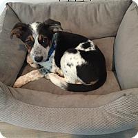 Adopt A Pet :: Artemis - Los Angeles, CA