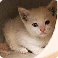 Adopt A Pet :: snow - Sacramento, CA