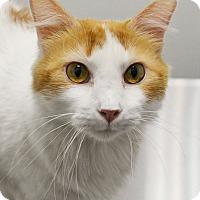 Adopt A Pet :: Northwest - Springfield, IL