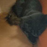 Adopt A Pet :: Jax - Queenstown, MD