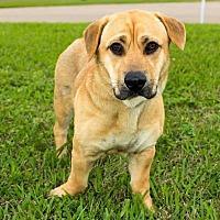 Adopt A Pet :: Popocco - Missouri City, TX