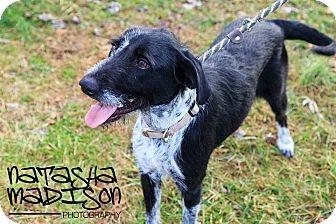 Terrier (Unknown Type, Medium) Mix Dog for adoption in Lewis Center, Ohio - Madison