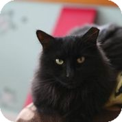 Domestic Longhair Cat for adoption in Brimfield, Massachusetts - Miracle