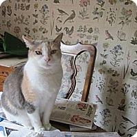 Adopt A Pet :: Sabrina - Cerritos, CA