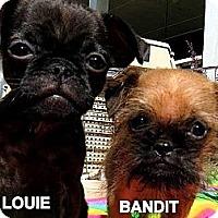 Adopt A Pet :: BANDIT & LOUIE - ADOPTION PEND - Cumming, GA