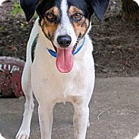 Adopt A Pet :: Sparky - White Plains, NY