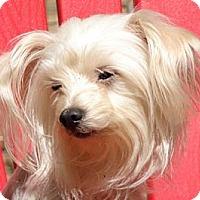 Adopt A Pet :: Lucas - Afton, TN