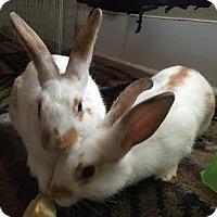 Adopt A Pet :: Ramone - Williston, FL