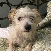Adopt A Pet :: Henry - El Segundo, CA