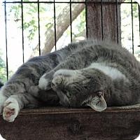 Adopt A Pet :: Mimi - St. Johnsville, NY