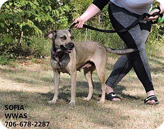 Shepherd (Unknown Type) Mix Dog for adoption in Washington, Georgia - Sofia
