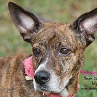 Adopt A Pet :: Pink - Tampa, FL