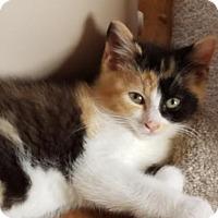 Adopt A Pet :: Petunia - Potomac, MD