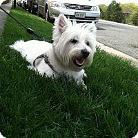 Adopt A Pet :: West - Fairfax, VA