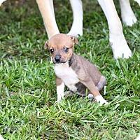 Adopt A Pet :: Aida - South Dennis, MA