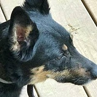Adopt A Pet :: BLAKE - Hampton, VA