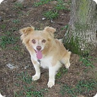 Adopt A Pet :: Timothy - Rocky Mount, NC