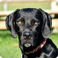 Adopt A Pet :: Stanley - Huntley, IL