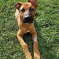 Adopt A Pet :: Theo - Wethersfield, CT