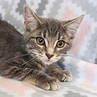 Adopt A Pet :: Ember - Muskegon, MI