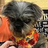 Adopt A Pet :: Cora - Kennesaw, GA