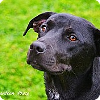 Adopt A Pet :: Dawson - PENDING, in Maine - kennebunkport, ME