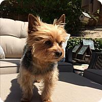 Adopt A Pet :: Aiko - Los Angeles, CA
