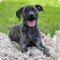 Adopt A Pet :: *Turk - PENDING - Westport, CT