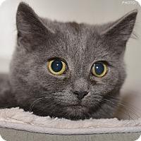 Adopt A Pet :: Bell - Medina, OH