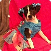 Adopt A Pet :: Mindi - Marlton, NJ