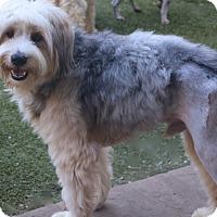 Adopt A Pet :: Frosty - Woonsocket, RI