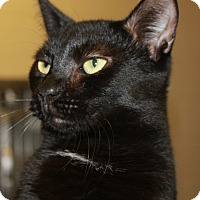 Adopt A Pet :: ZOMBIE - Clayton, NJ