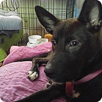 Adopt A Pet :: Moxie - Mount Holly, NJ