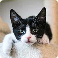 Adopt A Pet :: Squeaker - Los Angeles, CA
