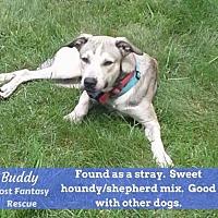 Adopt A Pet :: Buddy - Ceres, VA