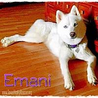 Adopt A Pet :: Emani - Carrollton, TX