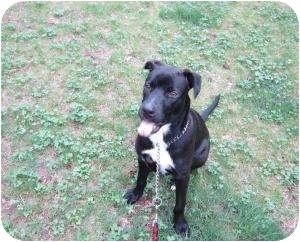 Labrador Retriever Mix Dog for adoption in Bloomfield, Connecticut - Jonas