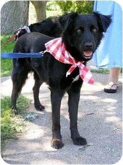 Border Collie/Labrador Retriever Mix Dog for adoption in Bellevue, Nebraska - Ceana