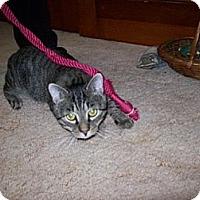 Adopt A Pet :: Scooter - Cranford/Rartian, NJ