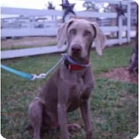 Adopt A Pet :: Ray Ray **ADOPTED** - Eustis, FL
