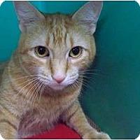 Adopt A Pet :: Virgil - Secaucus, NJ