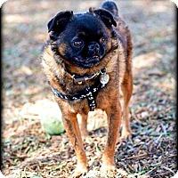 Adopt A Pet :: MONTE - ADOPTION PENDING - Los Angeles, CA