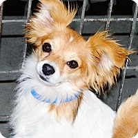 Adopt A Pet :: Tucker - San Diego County, CA
