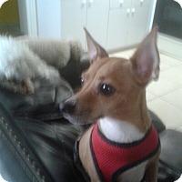 Adopt A Pet :: Emily - Pembroke pInes, FL
